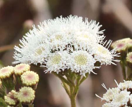 今月の薬用植物