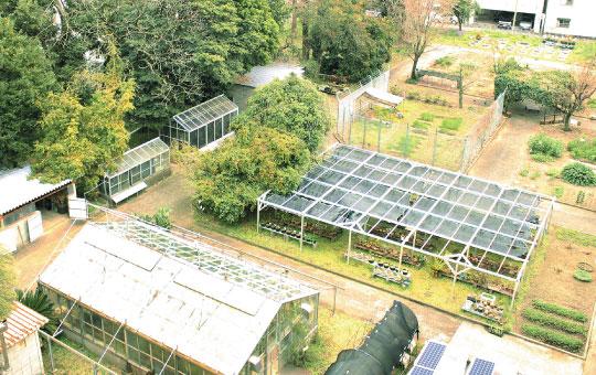 薬用植物園