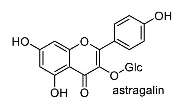 カキノキ 化学構造式1
