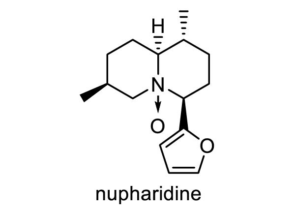 コウホネ 化学構造式1