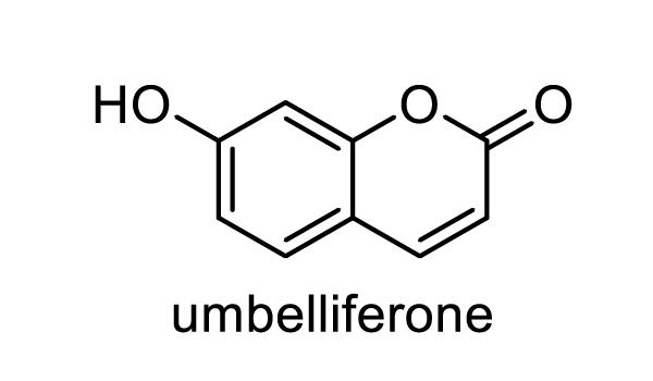 シシウド 化学構造式1