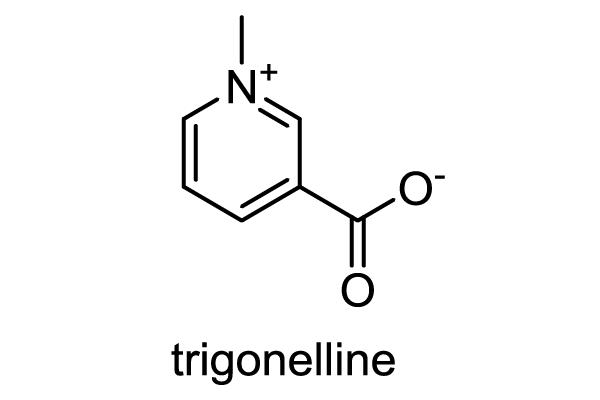 トウガン 化学構造式1