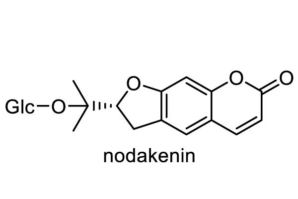 ノダケ 化学構造式1