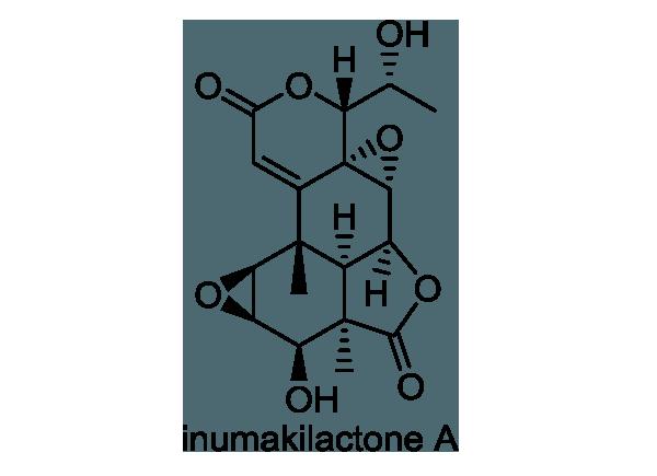イヌマキ 化学構造式1