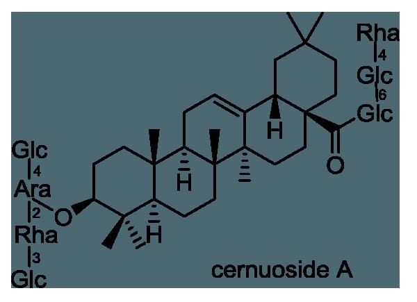 オキナグサ 化学構造式1