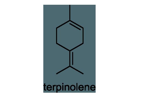 セリ 化学構造式1