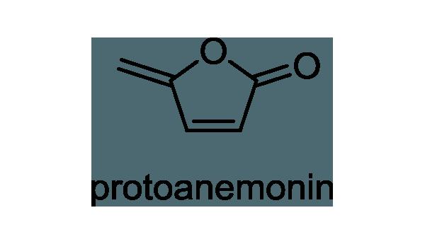 センニンソウ 化学構造式1