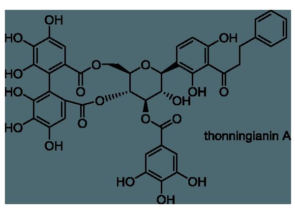 タコノアシ 化学構造式1