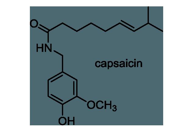 トウガラシ 化学構造式1