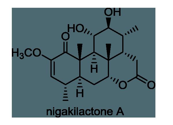 ニガキ 化学構造式1