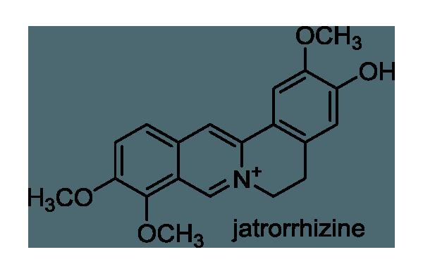 ホソバヒイラギナンテン 化学構造式1