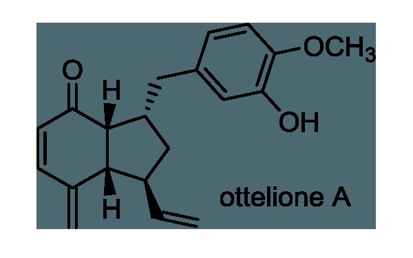 ミズオオバコ 化学構造式1