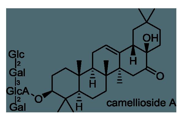 ヤブツバキ 化学構造式1