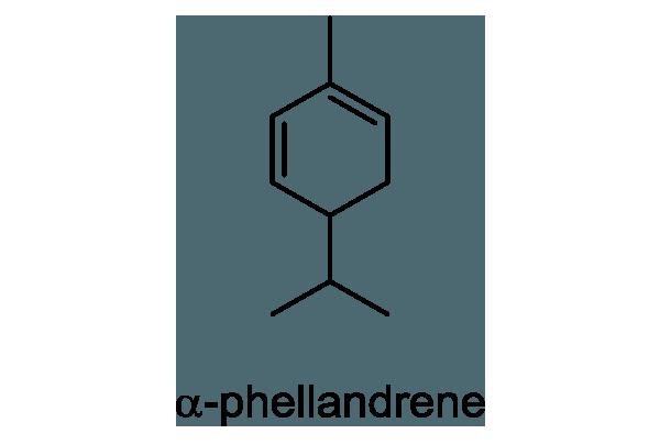 ヤブニッケイ 化学構造式1