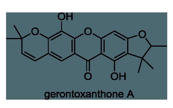 カカツガユ 化学構造式1