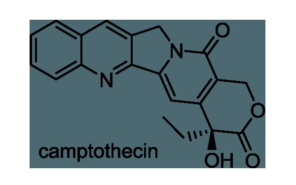 カンレンボク 化学構造式1
