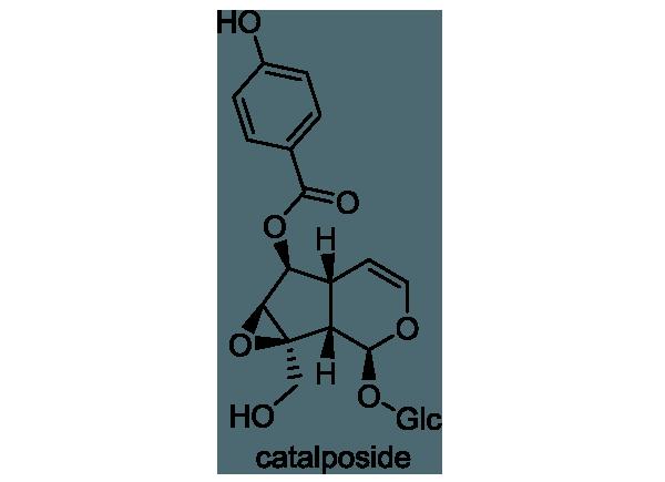 キササゲ 化学構造式1