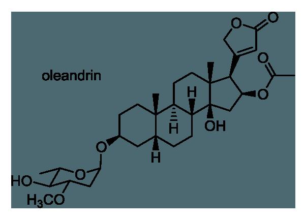 キョウチクトウ 化学構造式1