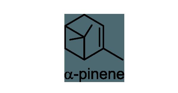 コノテガシワ 化学構造式1