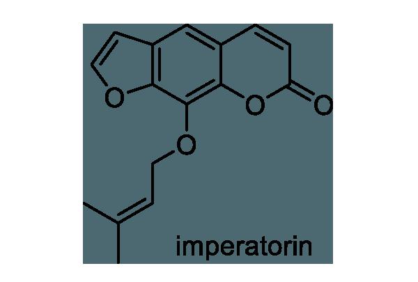 ハマボウフウ 化学構造式1