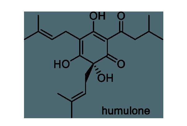 ホップ 化学構造式1
