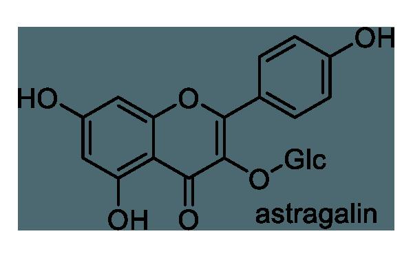 モロヘイヤ 化学構造式1