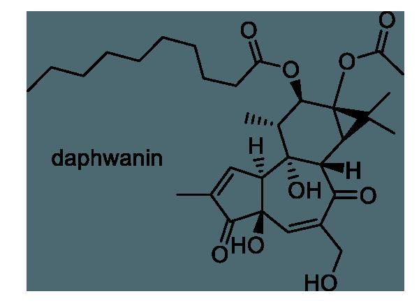 フジモドキ 化学構造式1