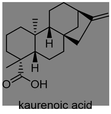 ウド 化学構造式2