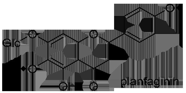 オオバコ 化学構造式4