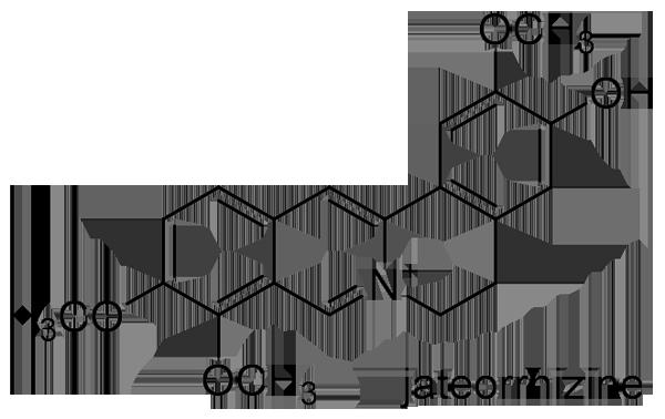キクバオウレン 化学構造式3