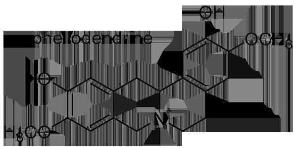 キハダ 化学構造式2