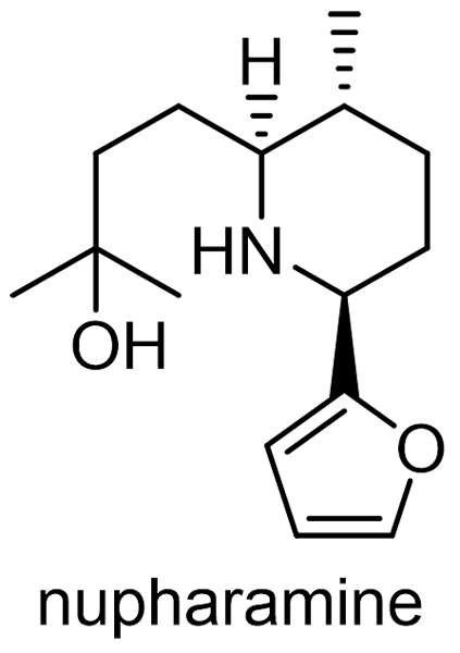 コウホネ 化学構造式3