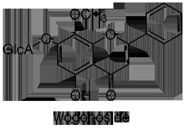 コガネバナ 化学構造式3