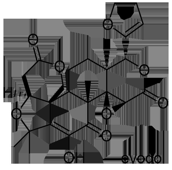 ゴシュユ 化学構造式3