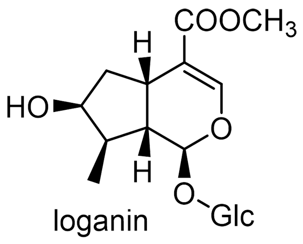 スイカズラ 化学構造式3