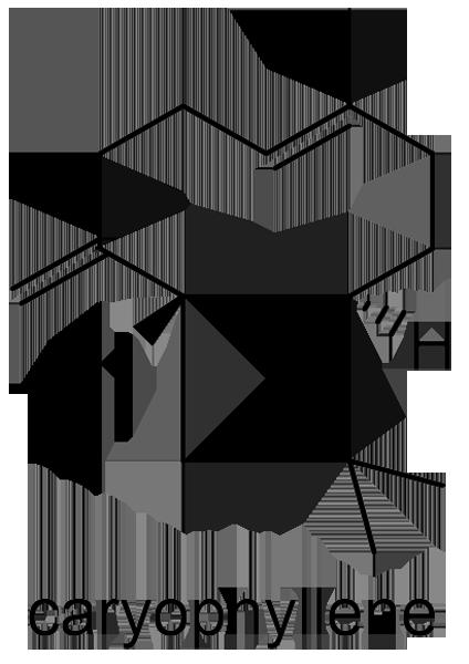 セキショウ 化学構造式3