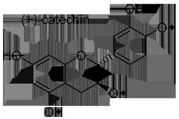 チャノキ 化学構造式3