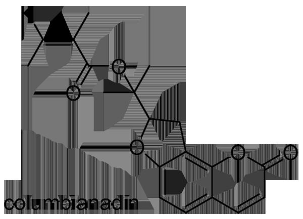 ノダケ 化学構造式3
