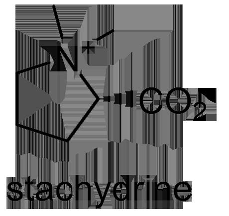 メハジキ 化学構造式2