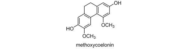 ヤマノイモ 化学構造式2