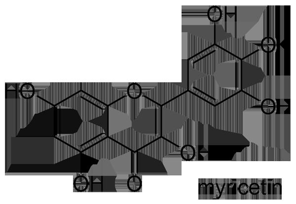 ヤマモモ 化学構造式2