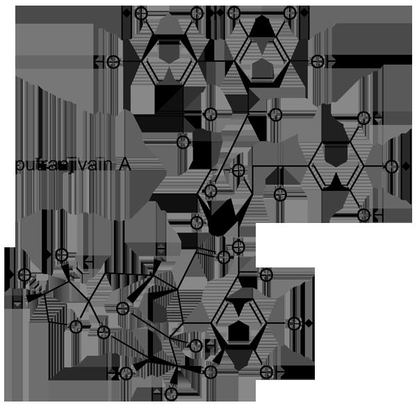 アカメガシワ 化学構造式3