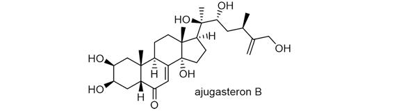 ウツボグサ 化学構造式3