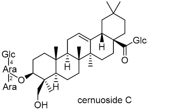 オキナグサ 化学構造式2