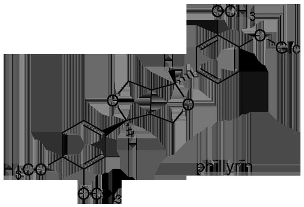 シナレンギョウ 化学構造式2