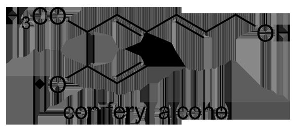 ニワトコ 化学構造式3