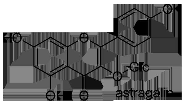 ノブドウ 化学構造式3