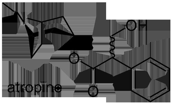 ハシリドコロ 化学構造式2