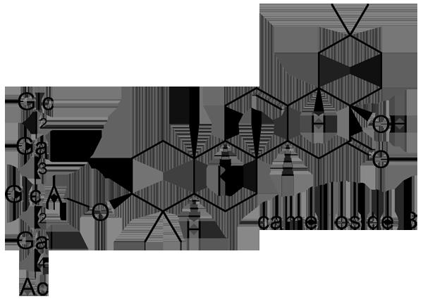 ヤブツバキ 化学構造式2