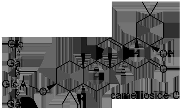 ヤブツバキ 化学構造式3